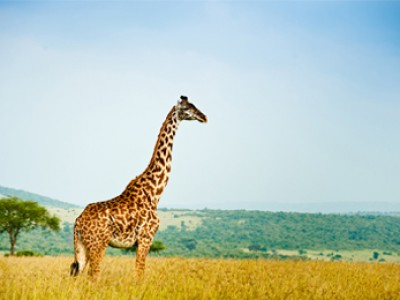 KENYA SAFARI 7 Nights / 8 Days